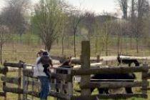 Parc de la Plaine des Bordes à Chennevières-sur-Marne